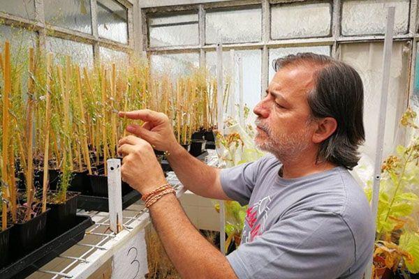 Científicos argentinos y suizos aportan clave para la generación de cultivos