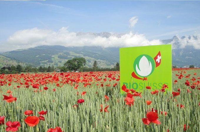 Las Ventas De Glifosato Bajaron Casi 50% En 10 Años En Suiza