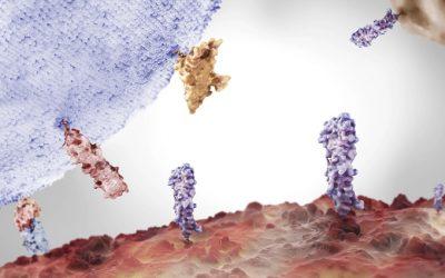Roche exhibe los resultados de Fase III de la combinación entre Tecentriq con Avastin