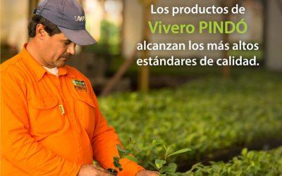 LOS PLANTINES DE VIVERO PINDÓ ALCANZAN LOS MÁS ALTOS ESTÁNDARES DE CALIDAD