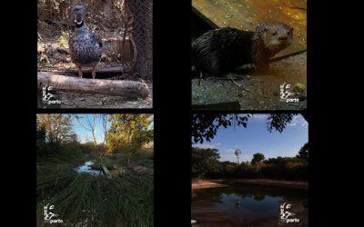 "ACCIONES POSITIVAS: ""REFUGIO DE ANIMALES SILVESTRES MUNDOAPARTE"""